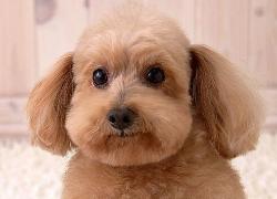 宠物店管理软件 适合宠物店的会员管理系统
